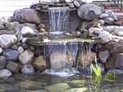 how to add fish to a new pond