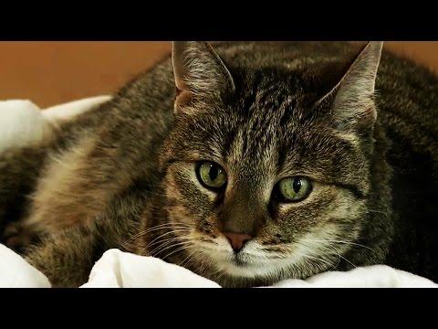 Erziehungstipps für Katzen - Katzenexpertin Birga Dex ...