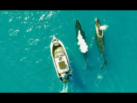 FISHING BIG IN THE SOLOMON ISLANDS | ESCAPE FISHING WITH ET
