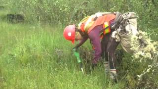 Planting trees to support caribou