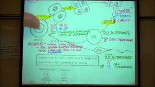 BIOLOGY LAB; MEIOSIS&CHROMOSOME ANOMALIES By Professor Fink