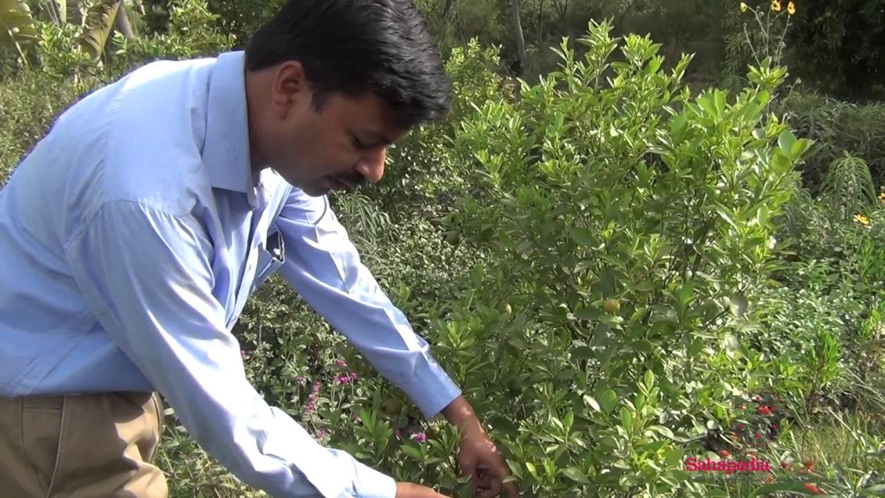 Walkthrough of Butterfly Conservatory, Yamuna Biodiversity Park