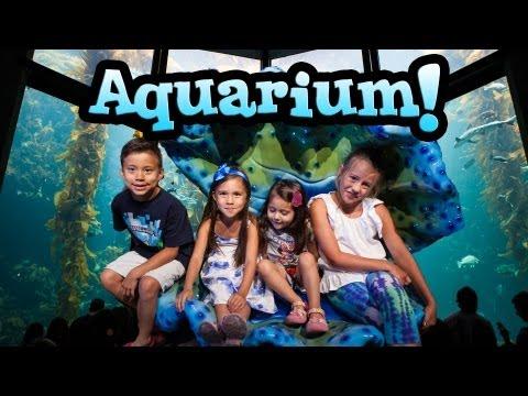 EvanTubeHD visits the MONTEREY BAY AQUARIUM & WILD THINGS!_Akvárium. Legeslegjobbak