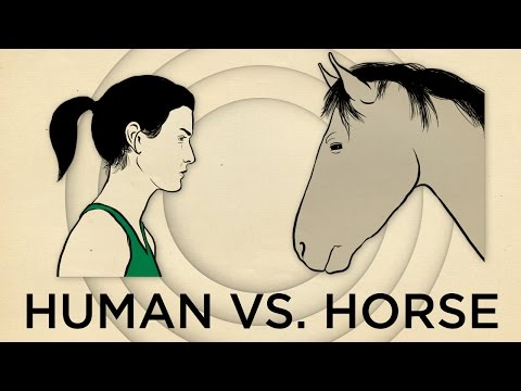 Human Vs Horse Marathon