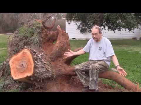 Engineering Principles for Removing a Large Tree Stump