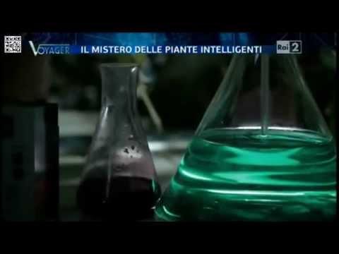 il mistero delle piante intelligenti