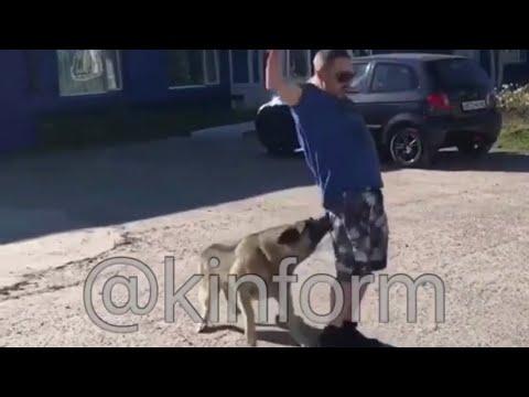 Собака помогает одержимому человеку избавиться от внутренних демонов