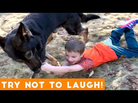 Funny clips - Try Not To Laugh Funniest Animal Compilation November 2018  Funny Pet Videos