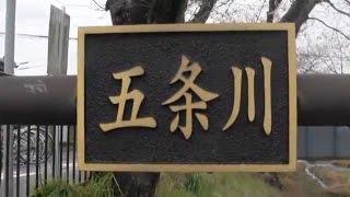 羽黒五条川桜まつり1開会式