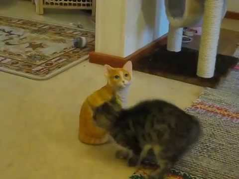 YouTube Kitten Attack Videos: Here Are Our Favorites