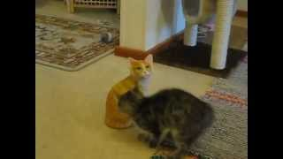 Do Yourself A Favor And Watch This Kitten Attack A Ceramic Cat - YouTube