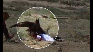 faze tari fetita atacata de un vultur