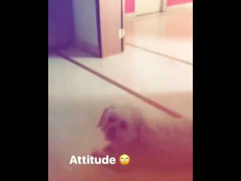 Video Parth Samthaan with dog Alex || latest insta story download in MP3, 3GP, MP4, WEBM, AVI, FLV January 2017