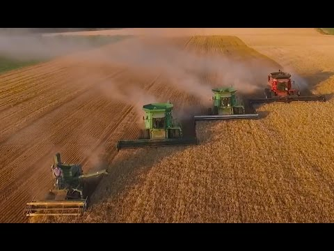 LaRosh Wheat Harvest 2015