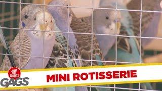 Little Birdy Rotisserie
