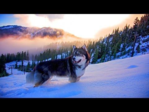 🌍Природа от которой захватывает Дух 4к | Best Nature beautiful Ultra HD 4k (видео)