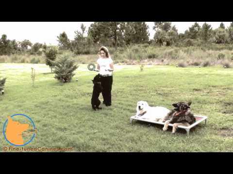 florida dog trainer - http://www.Fine-tunedCanines.com Join us on Facebook: http://www.facebook.com/FinetunedCanines/ Amazing dog movie starring dogs and showing some multiple dog...