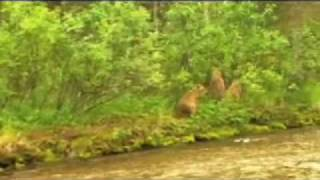 Video Grizzly charge on bow hunters MP3, 3GP, MP4, WEBM, AVI, FLV Oktober 2017