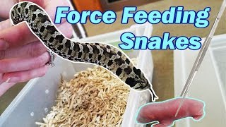 How to Force Feed a Snake by Snake Discovery