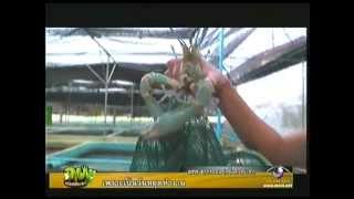 Kob Nok Kala 16 December 2012 - Thai TV Show