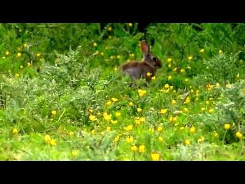 Rabbit hunt .22 Magnum .17 CZ