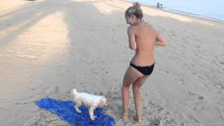That's A Bad Puppy, He Wants To Untie A Girl's Bikini