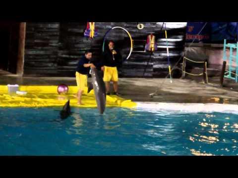 Show delfines Feria saltillo 2012 - parte 6