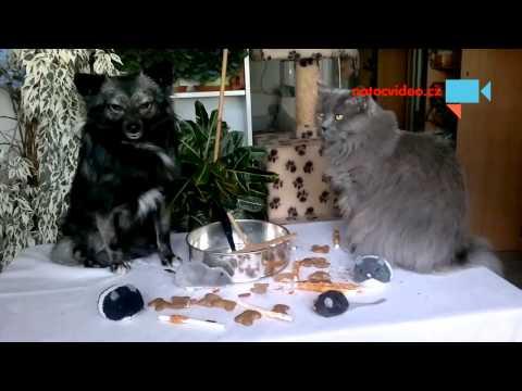Dort pro pejska a kočičky .