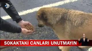Soğuk Hava Koşullarında Sokak Hayvanlarına Mama Dağıtımı - Kanal D