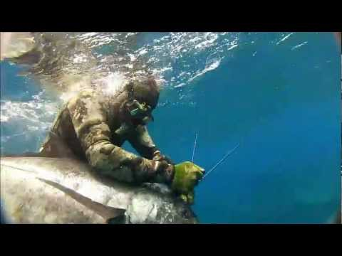 Spearfishing Ulua on Oahu, Hawaii