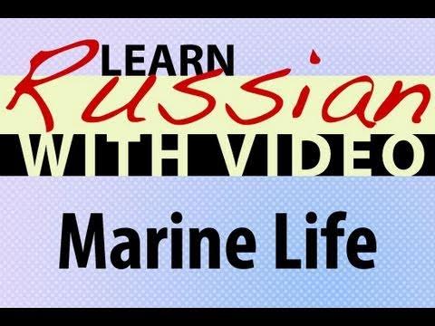 Russich lernen - Meeresleben