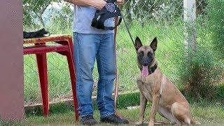 Polícia Civil de Bauru conta com ajuda de cachorra nas investigações