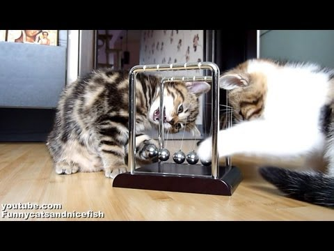 Kittensyoutube on Kittens Leren Natuurkunde   Snuffelknuffel