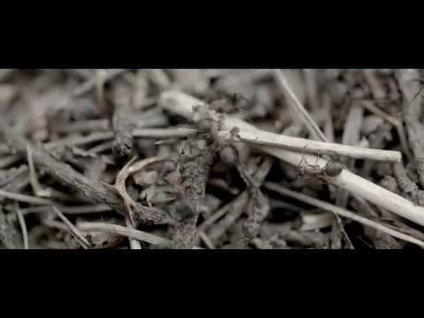 Basstard - Antimaterie Video