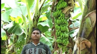 Banana Farmer 2 (Jaivik)
