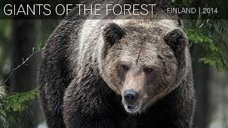Nonton Wild Brown Bears - Finland | 2014 Film Subtitle Indonesia Streaming Movie Download