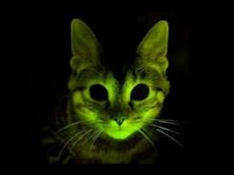 Nature's Brilliance: Glow in the Dark Animals, Plants and Minerals