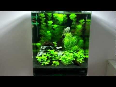 Aquascaping Lab - Tutorial Nano Cube Aqu - Youtube Downloader mp3