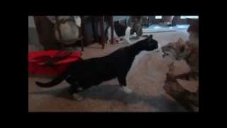 Funny Animals Doing Stupid Things - Funny Compilation 2013