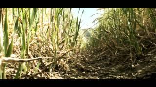 Video Opuka-Hands 2014