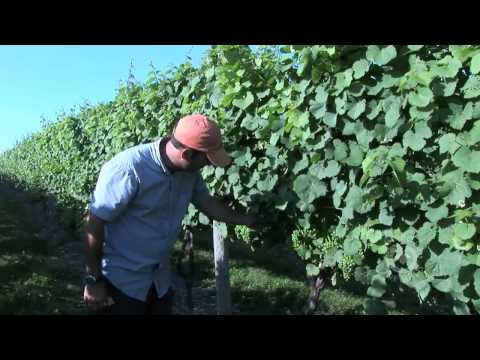 Winery Video Part 2