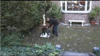 Dog Breeds&Dog Training : House Training A Dog From A Shelter