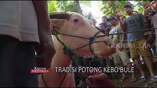 Video Tradisi Potong Kebo Bule di Pageruyung, Kendal | RAGAM INDONESIA MP3, 3GP, MP4, WEBM, AVI, FLV Januari 2019