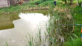 Myślał ,że już złowił karpia na wigilię! – Napad na rybach