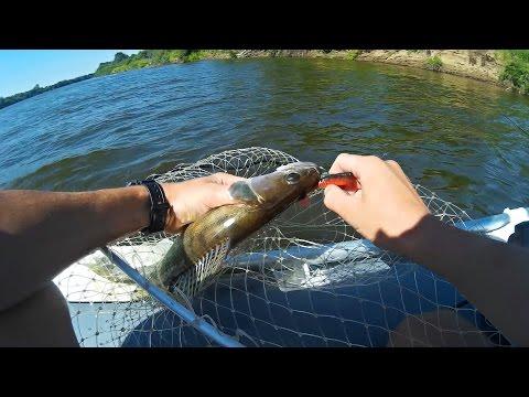 ловить судака на спиннинг видео
