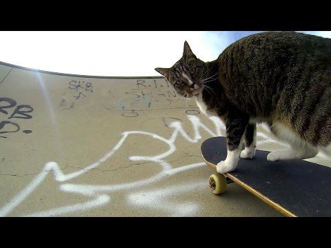 Котейка катается на скейте