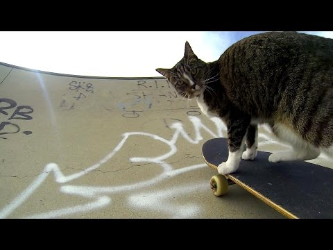 un gatto con la passione per lo skateboard: guardate come si diverte!