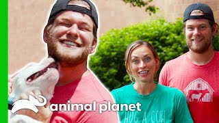 Dan Has An Instant Connection With This Dog | Saved By The Barn by Animal Planet