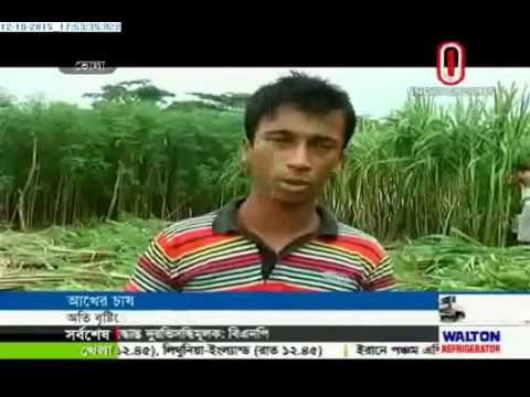 Sugar cane farmers fear losses (12-10-2015)