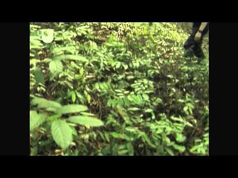 Wechselseitiger Nutzen - Untersuchung der Pilze: The Wood-Wide Web (2/4)